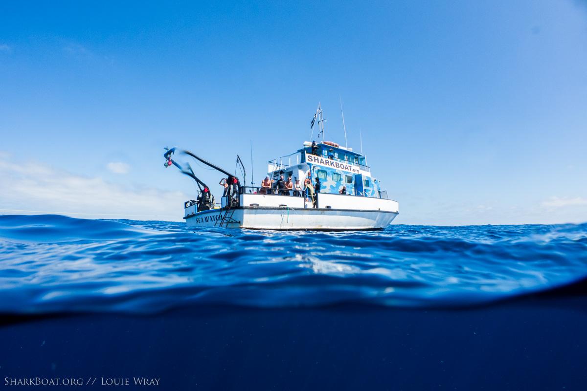 SeaWatch - SharkBoat