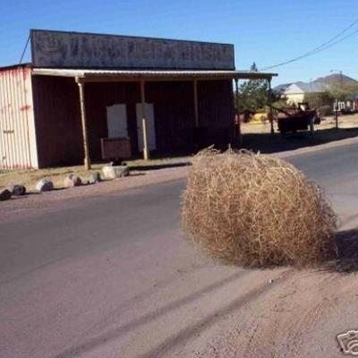 tumbleweed town.jpg