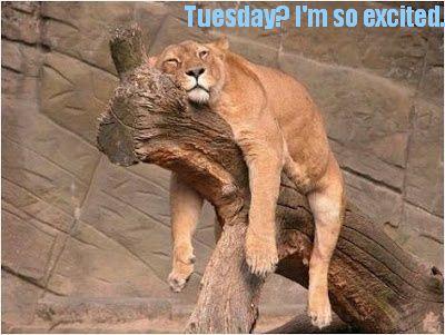lion on tree Tuesday.jpg
