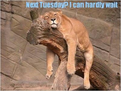 lion on tree next Tuesday.jpg